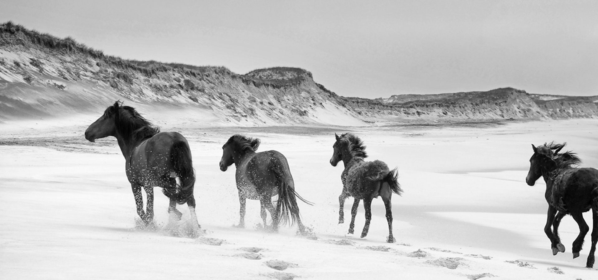 Sable Horses