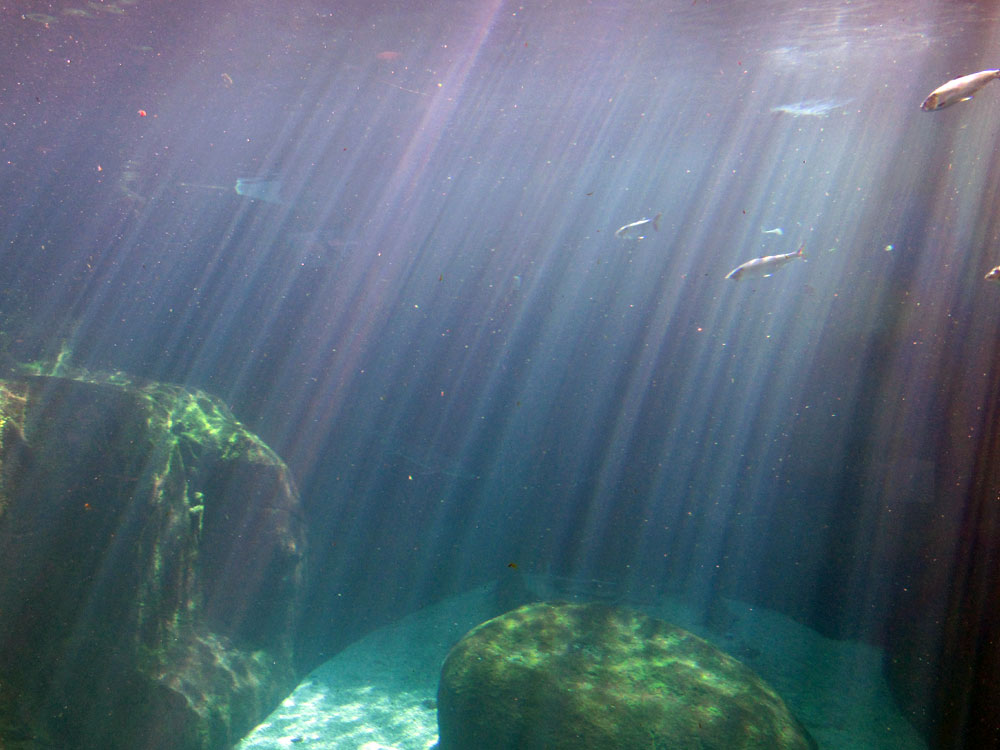 Biodome Below Water