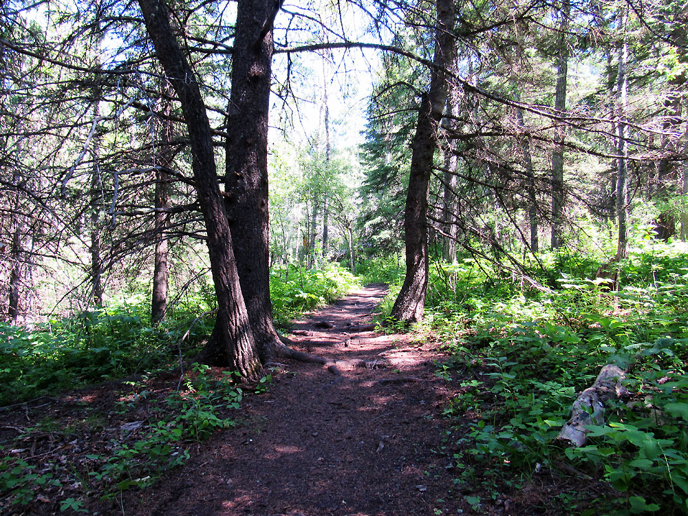Hiking trails in Cypress Hills