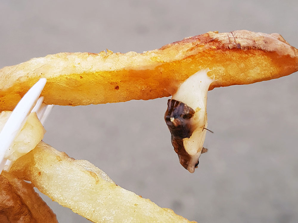 Cricket on a fry